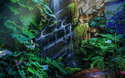 NARAVOSLOVNI DAN za šestošolce: Vulkanija in Tropski vrt v Prekmurju