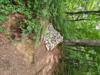 sd-senturska-gora-4-razredi-2020-11